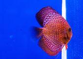 Fisch-native — Stockfoto