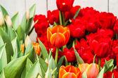 Kleurrijke tulpen — Stockfoto