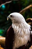 Bird — Stock fotografie