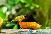 Bird — Foto Stock