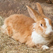 Stock Photo: Bunny, rabbit