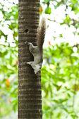 écureuil assis sur l'arbre — Photo