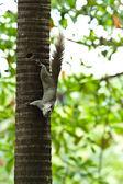 Белка сидит на дереве — Стоковое фото