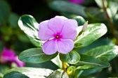 Krásné květiny — Stock fotografie