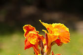The beautiful flowers — Stock Photo