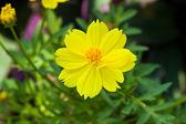 The beautiful flowers — Foto de Stock