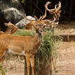 Deer — Stock Photo #33089725