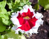 Las flores hermosas — Foto de Stock