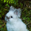 Cute Rabbit in Grass — Stock Photo