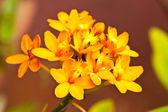 красивые цветы — Стоковое фото