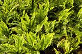 Panoramic Green leaves — Stock Photo
