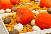 Few yellow corn — Stock Photo