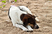 Dog sleeping — Stock Photo