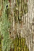 Fondo de pared de madera o textura — Foto de Stock