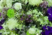 Vackra vårblommor — Stockfoto
