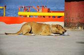 Dog try to eat ice — Stok fotoğraf