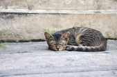 Vagrant cat. Dirty an animal in the street — Stock Photo