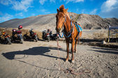 Horse for tourist rent at Mount Bromo volcanoes — Stock Photo