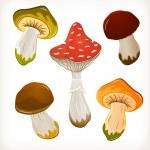 Mushroom set — Stock Vector #13183411