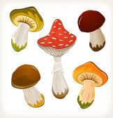 Mushroom set — Stock Vector