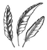 Vintage feather set — Stock Vector