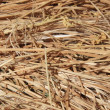 Stock Photo: Straw Dry grass in shot from close range