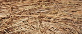 Straw Dry grass in the shot from close range — Stock Photo