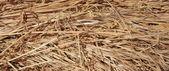Grama seca palha no tiro de curta distância — Foto Stock