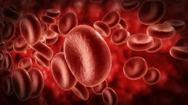 Blood cells.