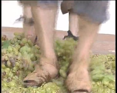 Treading grapes to obtain wine and must. Ancestral practice. — Stock Video