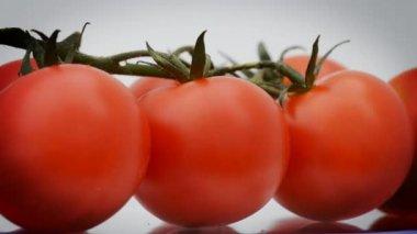 Cherry rajčata v otočení, smyčka — Stock video