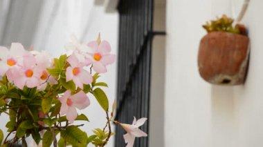 Typische andalusische balkone — Stockvideo