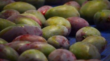 包装ラインでマンゴー フルーツ — ストックビデオ