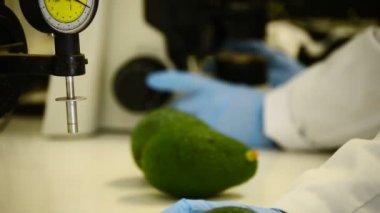 Analisando abacates — Vídeo Stock