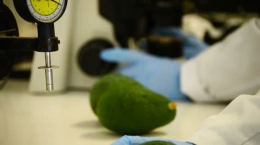 Analyzing avocados — Stockvideo