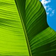 Banana Leaf — Stock Photo #16163067