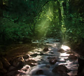 Forest and Creek — Stock Photo