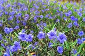 Purple flower — Stock Photo