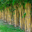 Planting bamboo wall — Stock Photo #30847385