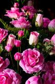 Rosa artificial — Foto Stock