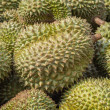 Stock Photo: Durian.
