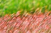 Streszczenie zieleni — Zdjęcie stockowe