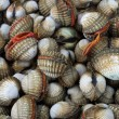 Cockles — Stock Photo