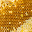 Honeycomb — Stock Photo #31666773