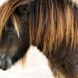 Stock Photo: Dwarf horse
