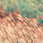 Abstract nature background with grass — Stock Photo