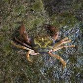 Crabe près de cascade — Photo