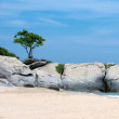 Rocks at sea with tree. — Stock Photo #35823475