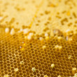 Stock fotografie: Honeycomb