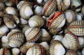 Cockles — Foto Stock